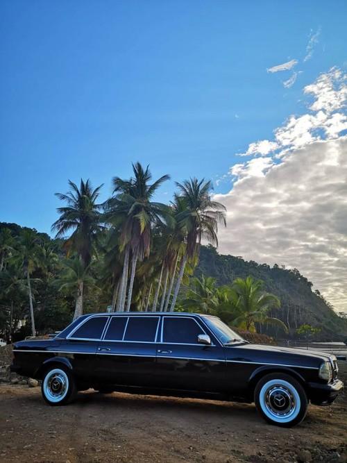 JACO-BEACH-PALM-TREE-LIMOUSINE-CENTRAL-AMERICA.jpg